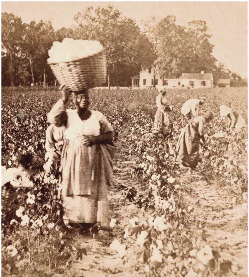 Slaves picking cotton in South Carolina, c. 1860. Rob Oechsle Collection.