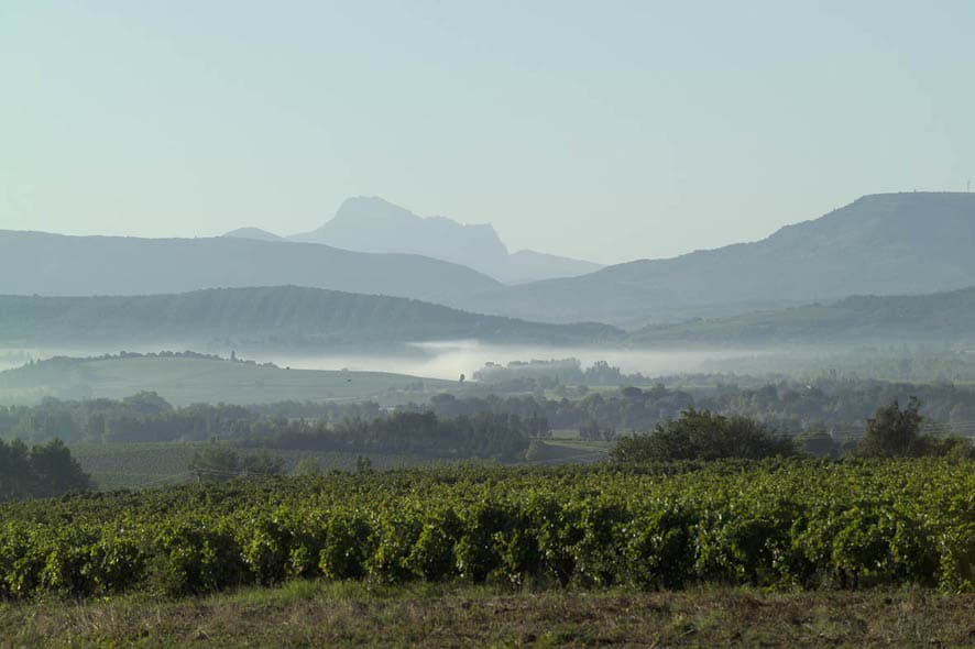 The vineyards at Antech