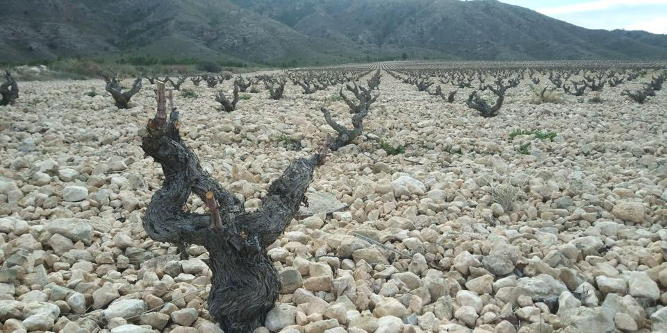 old-vines-bodegas-luzon-closeup.jpg