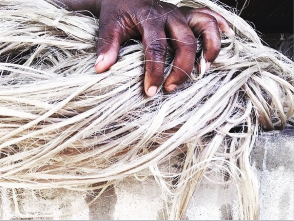 Dying Sisal.png