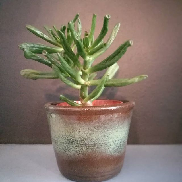 This one might become my new favourite! @ma_keramik #plantlove #ma_keramik #pot #plants #vienna #ceramic #unique #handmade