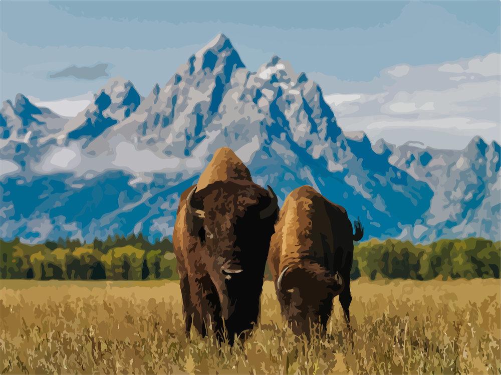 bison tetons.jpg