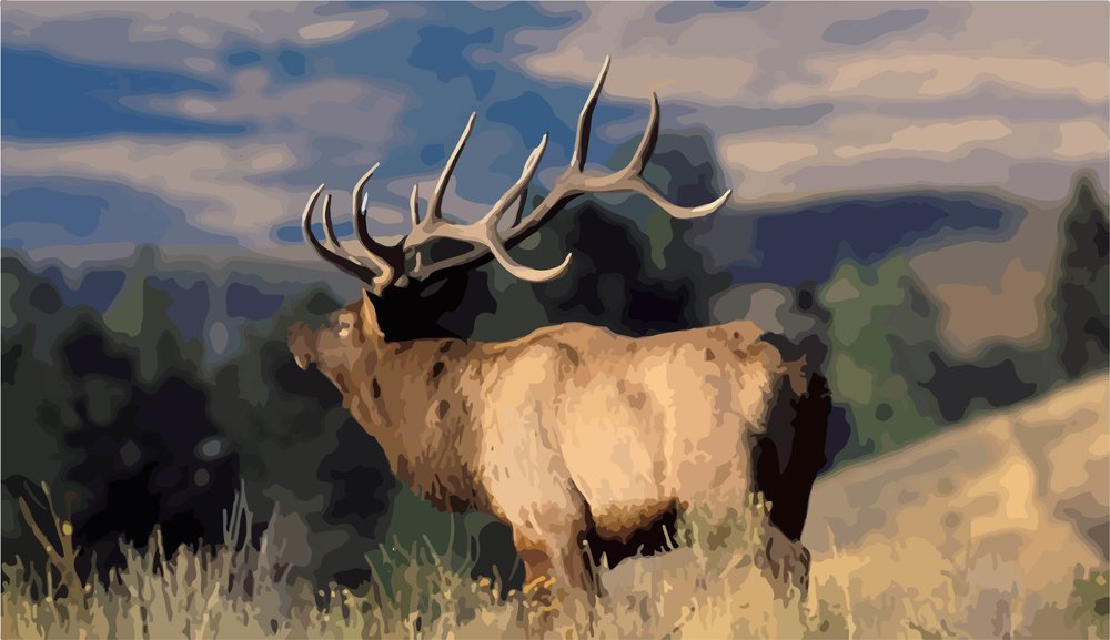 yellowstone-wildlife-elk-9.jpg