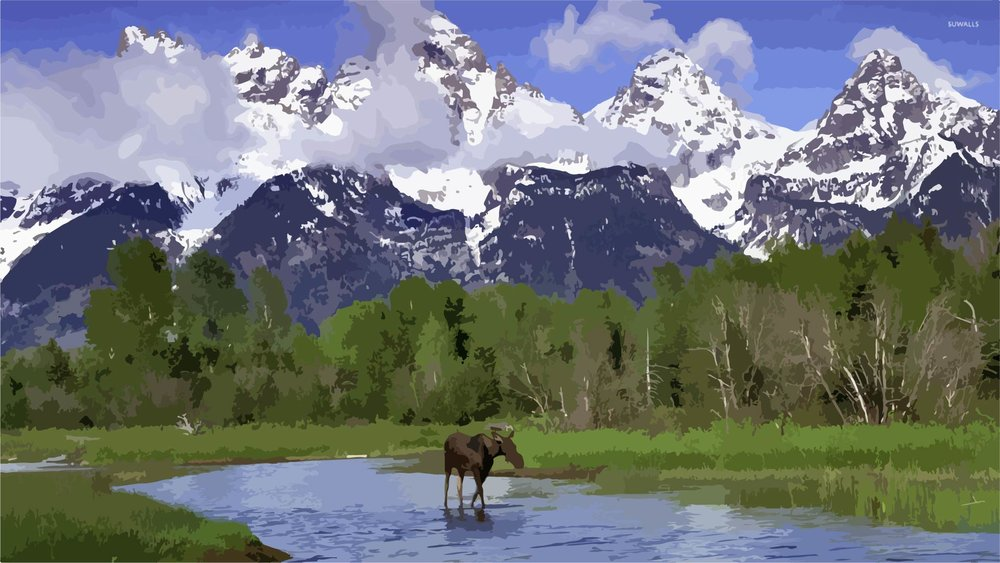 moose-in-grand-teton-national-park-52301-1920x1080.jpg