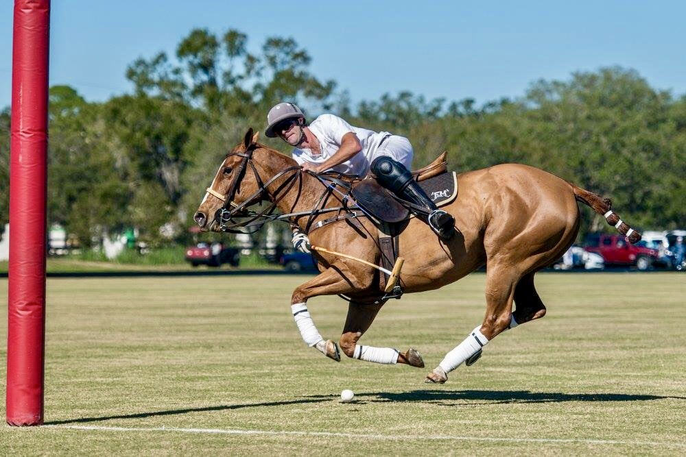 Polo Pony Rentals