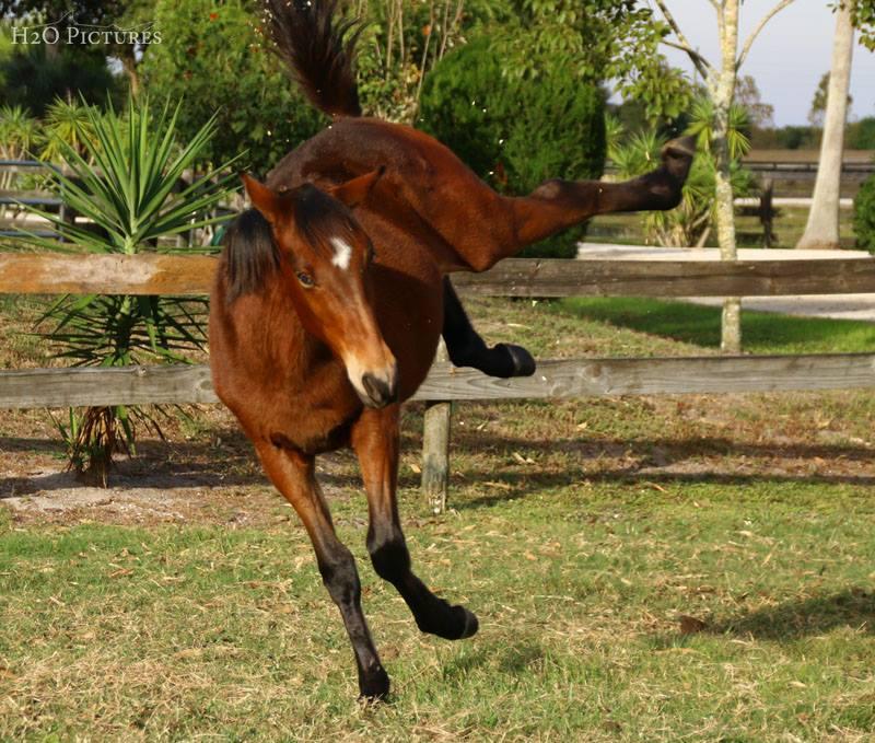 Baby kicking.jpg