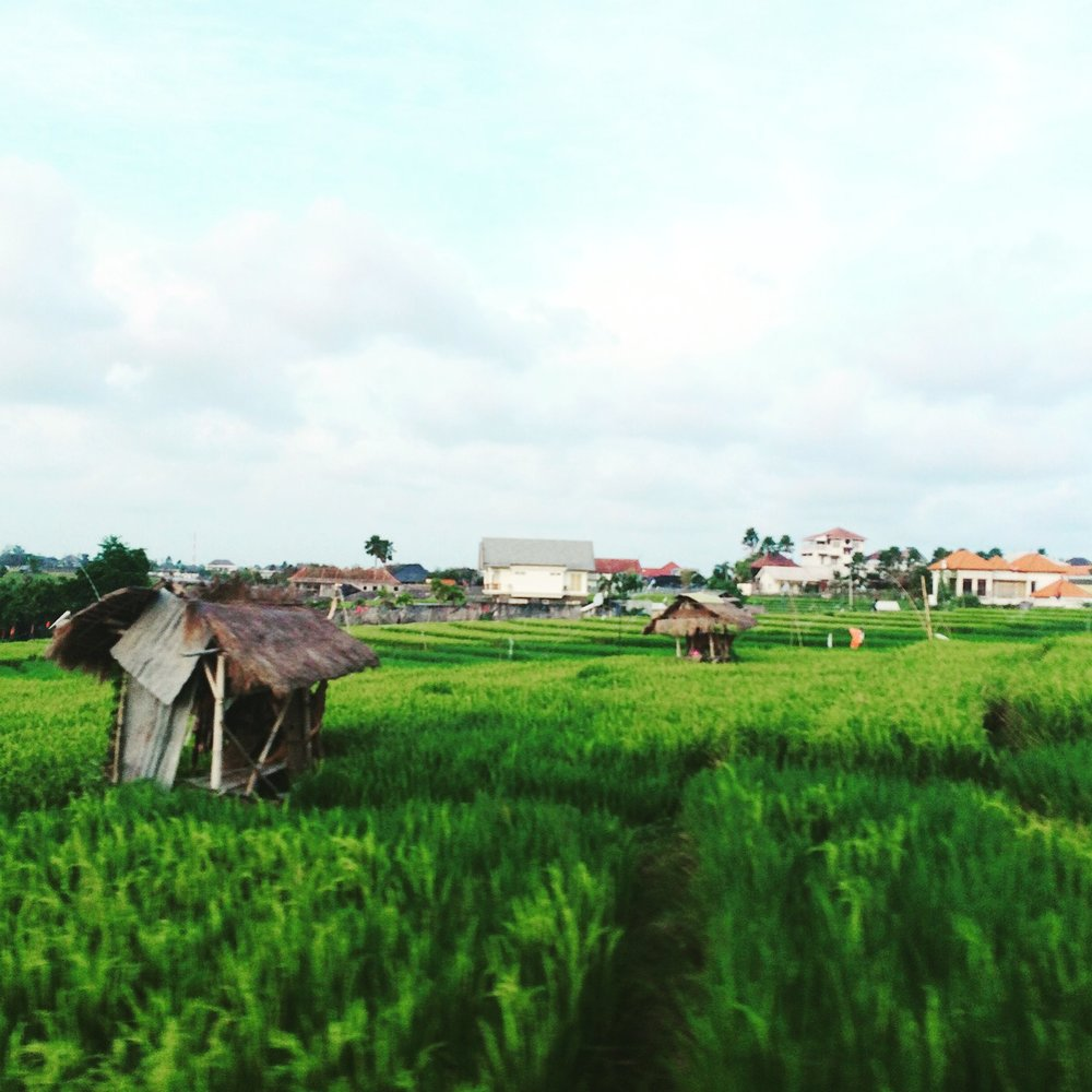 canggu_ricefield.JPG