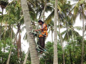 climber-6-300x225-1.jpg