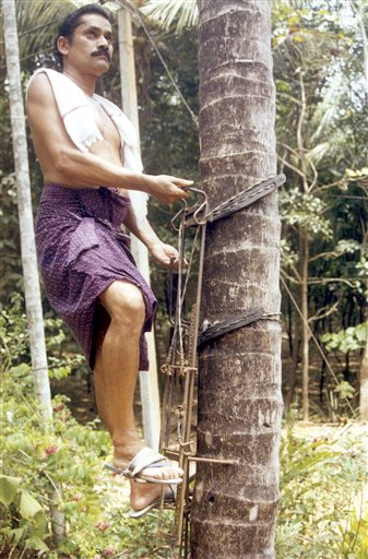 An example of a standing coconut tree climbing device and one of the first of its kind. Read more about the story on this device  here .