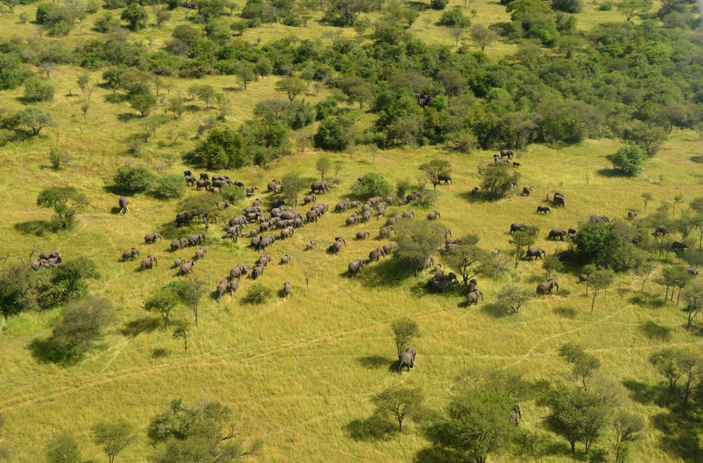 Image Courtesy of The Great Elephant Census