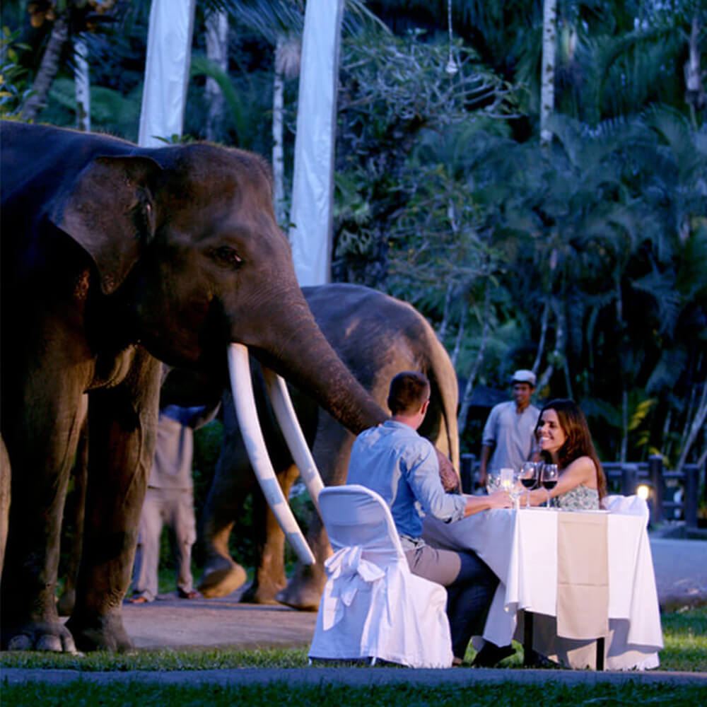 Elephants greet dinner guests at the Mason Elephant Lodge