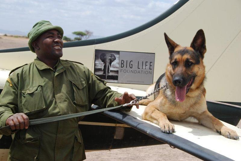 Big Life Ranger , Mutinda, with tracker dog, Jazz, sitting atop the wing of a Big Life plane. Photo Credit: Big Life