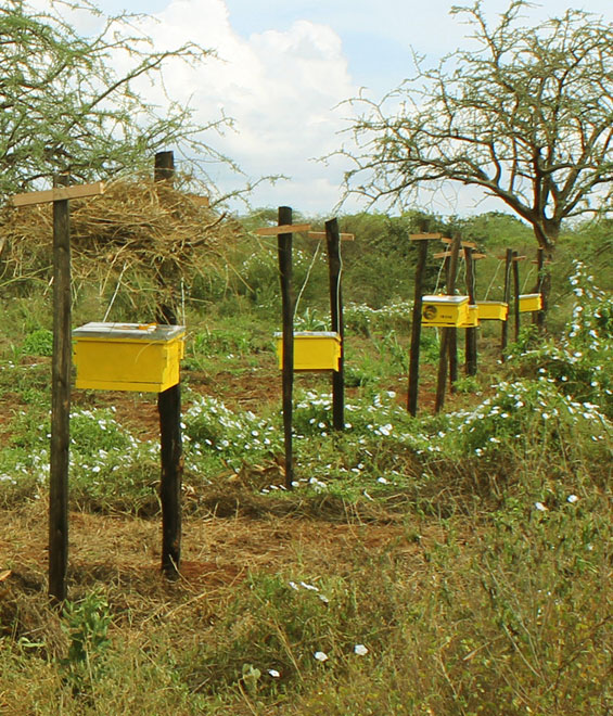 tsvao bee fence.jpg