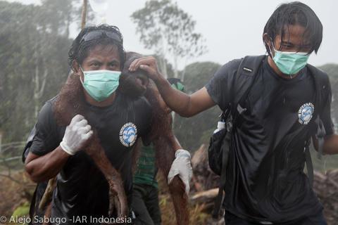 IAR INDONESIA.jpg