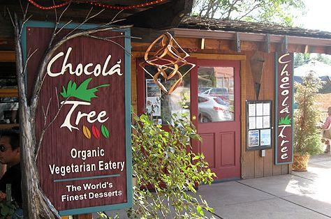 chocola tree.jpg
