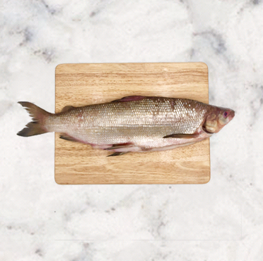 Whitefish   Origin: Lake Superior USA, Canada