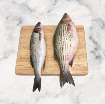 Stripped Bass   Origin: California   Branzino Seabass (Loup De Mer)   Origin: Greece