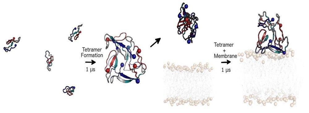 amyloidbeta.1200x1200.jpeg