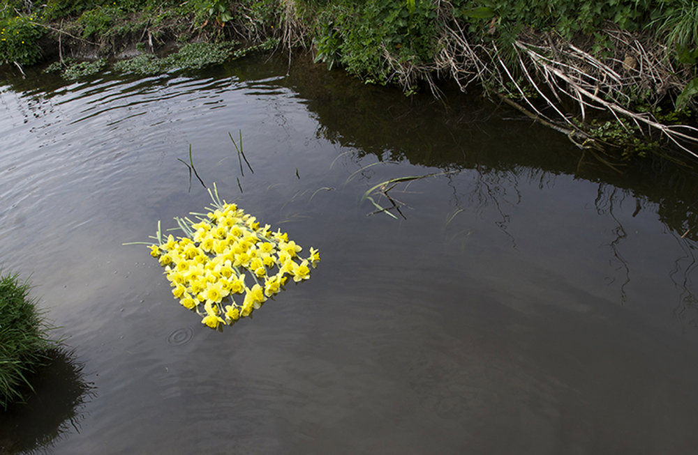 'April Come She Will.  80 daffodils purchased from Tesco, tied together and floated down the Ladbrook in Wiltshire'' -  2013 .