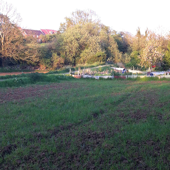 Allotments next to the track. Behind the trees – the Pudding Brook