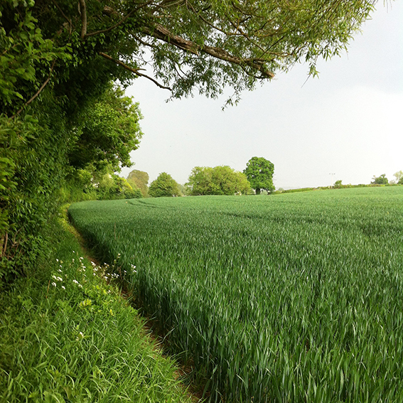 Arable field; the boundary on the left, made up of trees and shrubs, follows the course of the Pudding Brook.