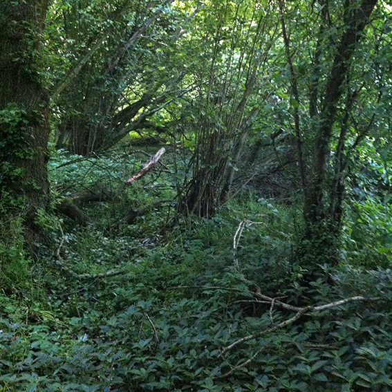 Jubilee Wood.