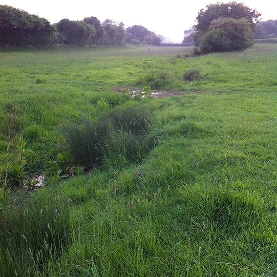 Looking upstream towards Stowell Farm crossroads and the point where the shallow watercourse emerges into the field.