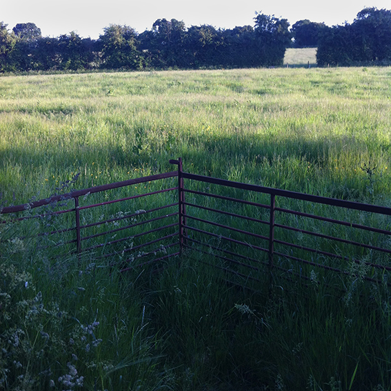 Gate leading into the field.