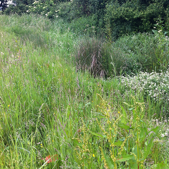 The Biddestone Manor stream bed; overgrown with plants.
