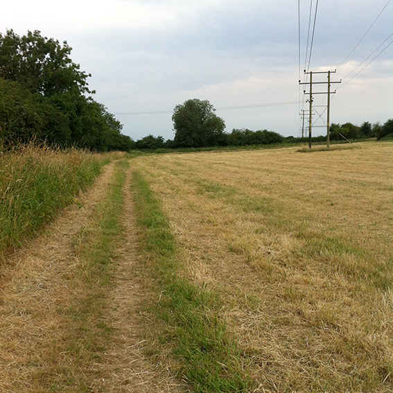Footpath across the field.