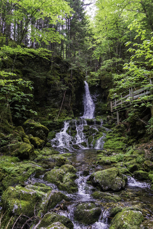 Hike #4 - Dickson Falls