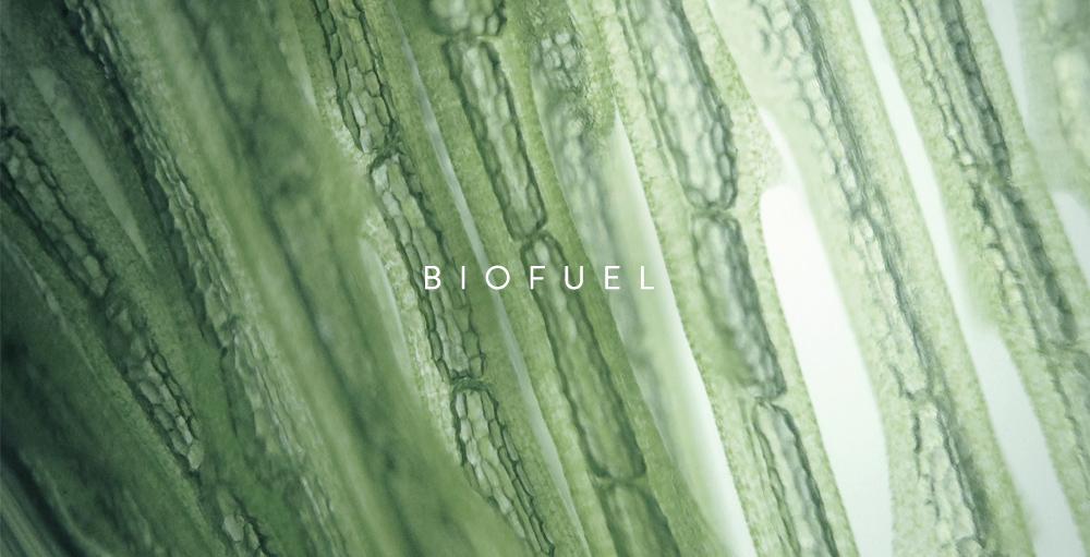MB_Biofuel.jpg