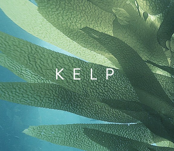 2_HP_KELP_MOBILE.jpg