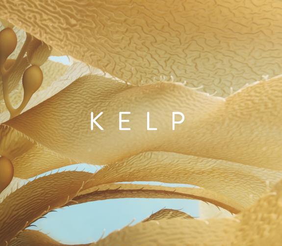 LP_KELP_MOBILE.jpg