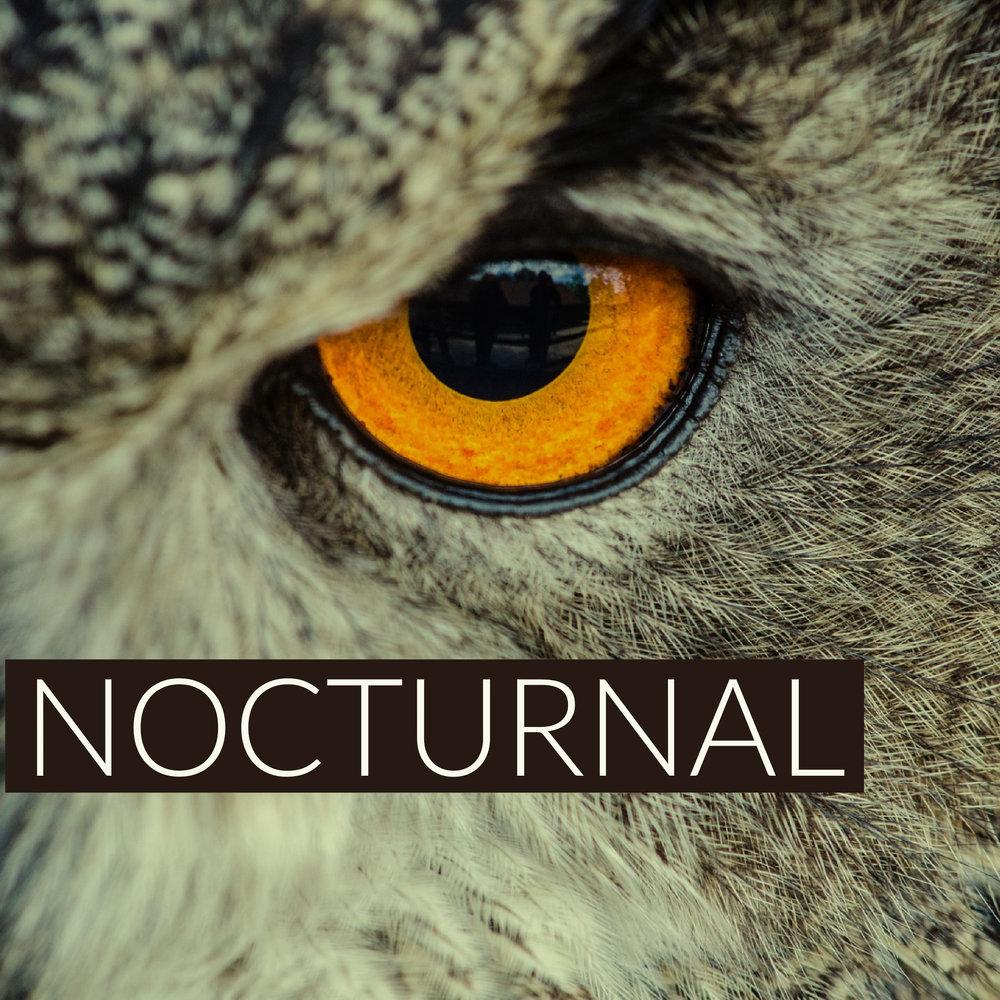 Nocturnal.jpg