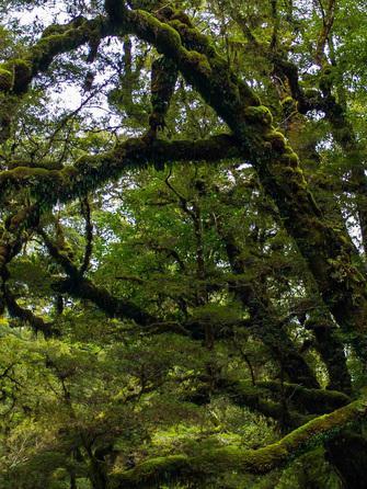 Inside Rarakau forest.
