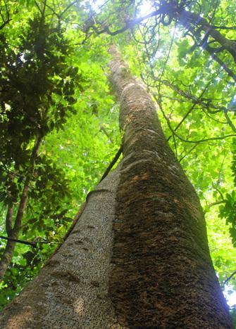 Ekos Sustainability Strategy