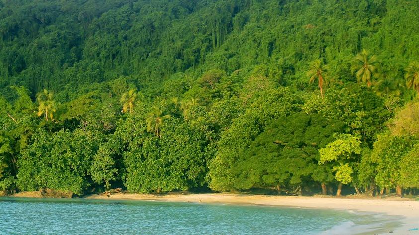 Loru Forest & Beach 1b small.jpeg