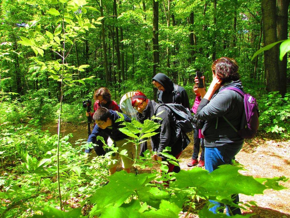 forest-walk.jpg