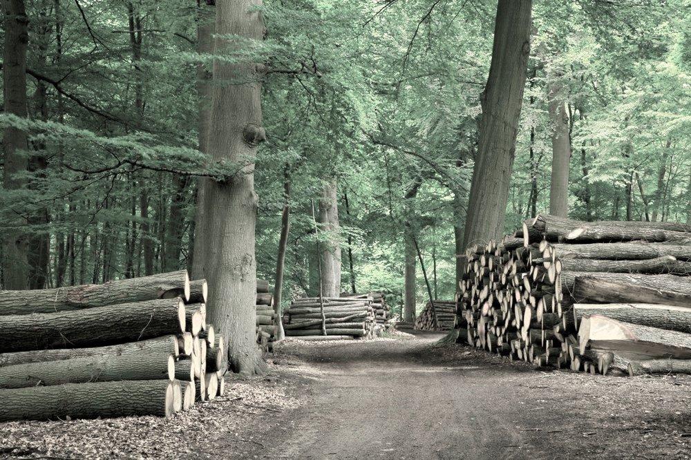 - Sustainability