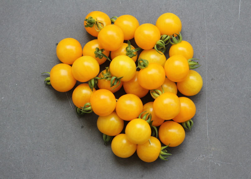 SFC_tomato_cherry_yellow.jpg