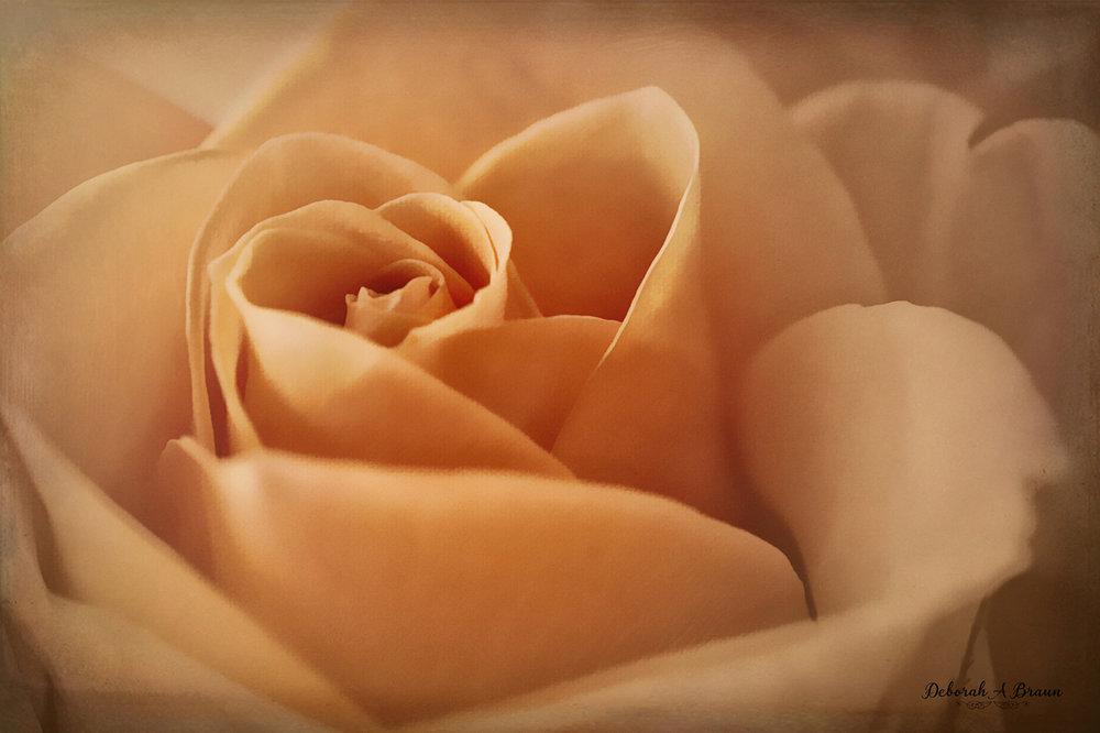 Coral Rose 2.jpg