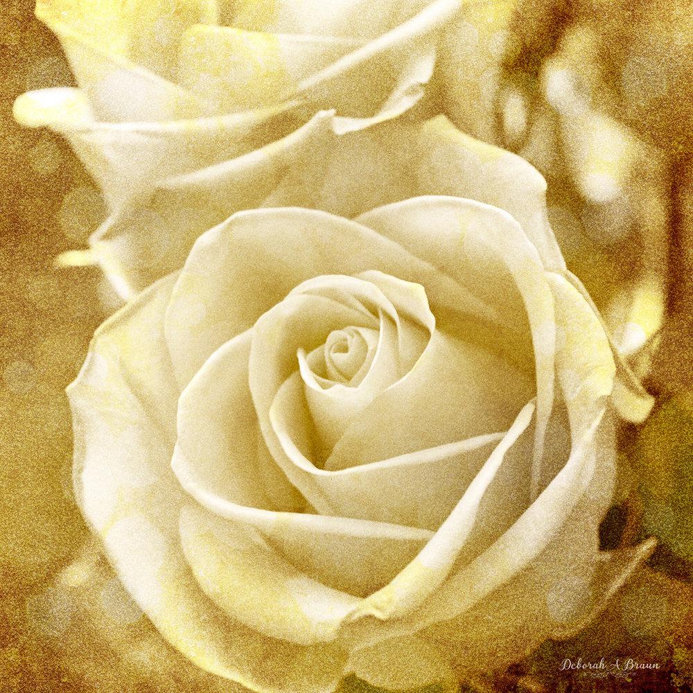 White Roses.jpg