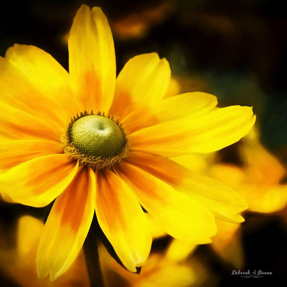 Yellow fantasy.jpg