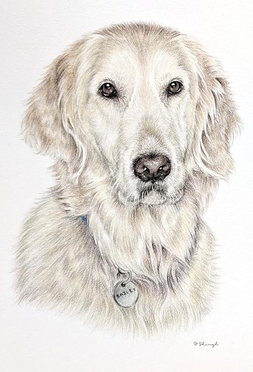 Charli-Pet-Portrait.jpg