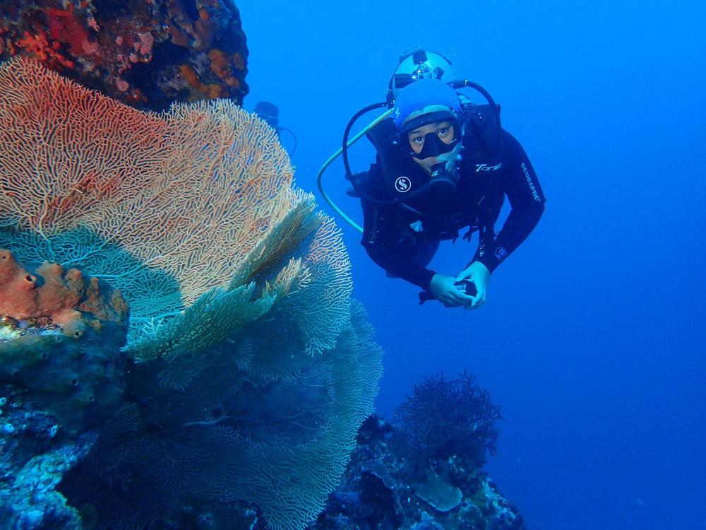 Photo credit to @akas_wakatobi at Wakatobi Dive Adventure
