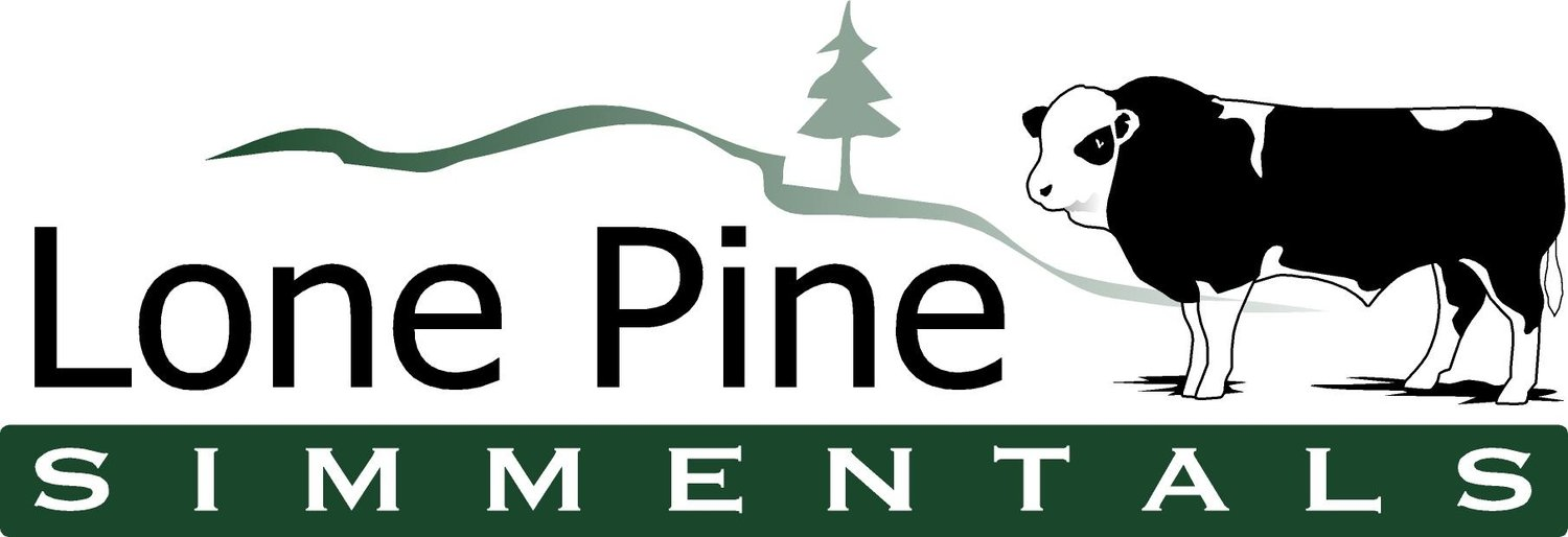Lone Pine Simmentals