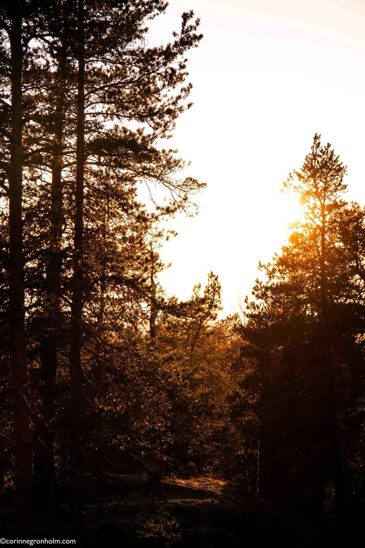 skogsglänta.jpg