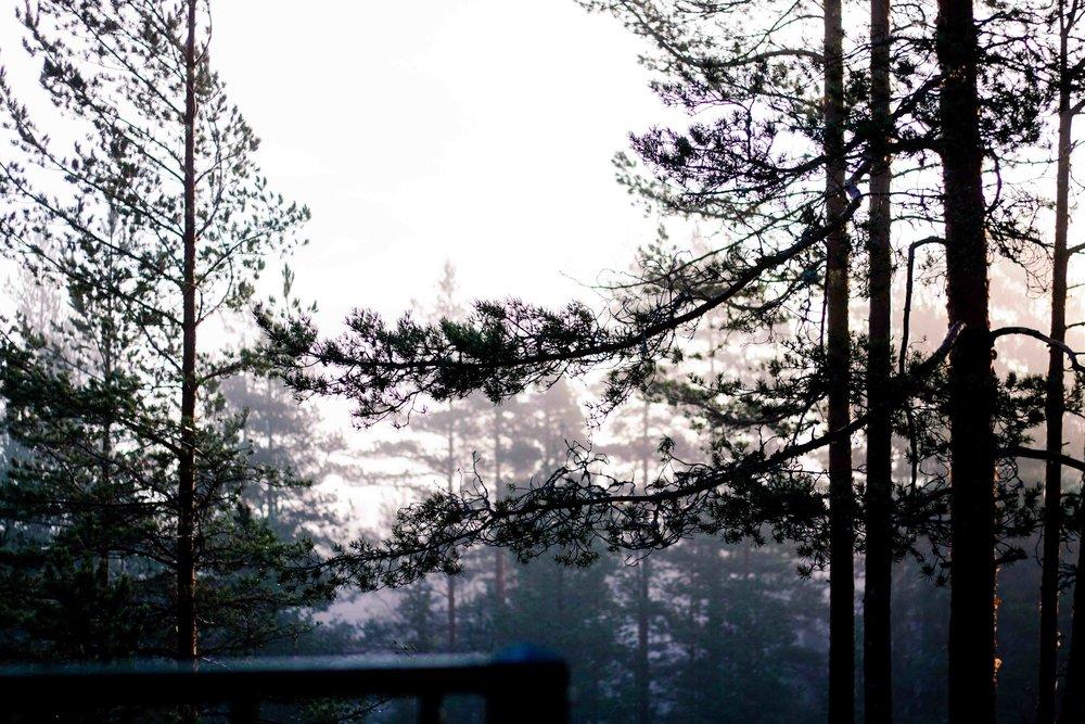 dimmigskog.jpg