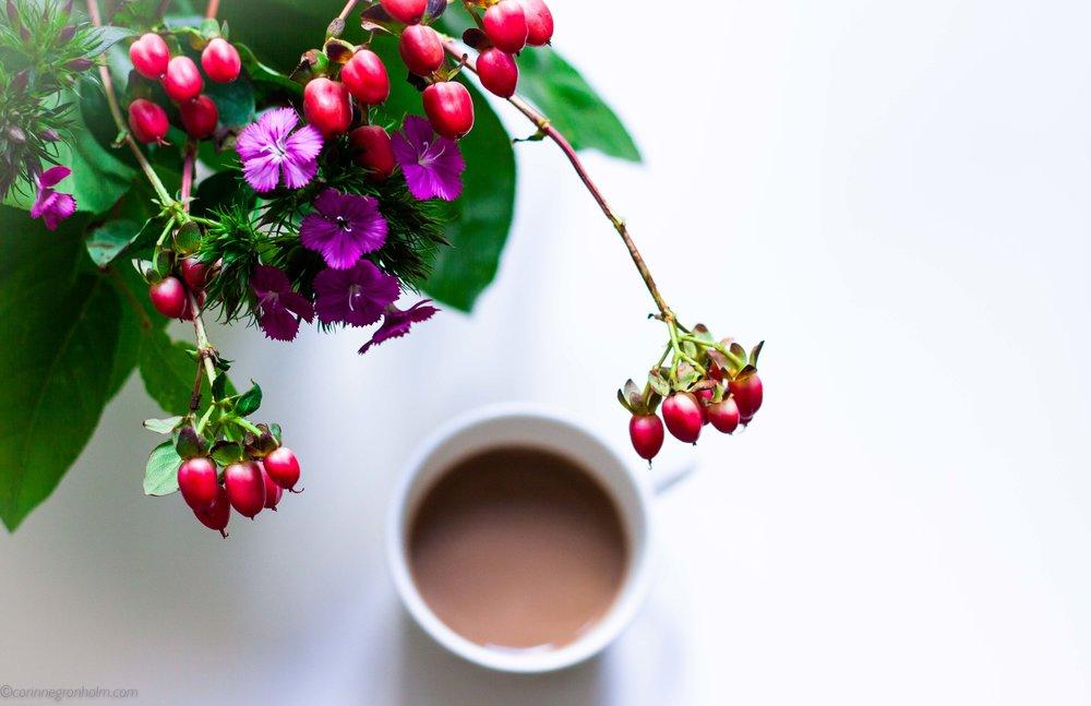 kaffeblommor.jpg